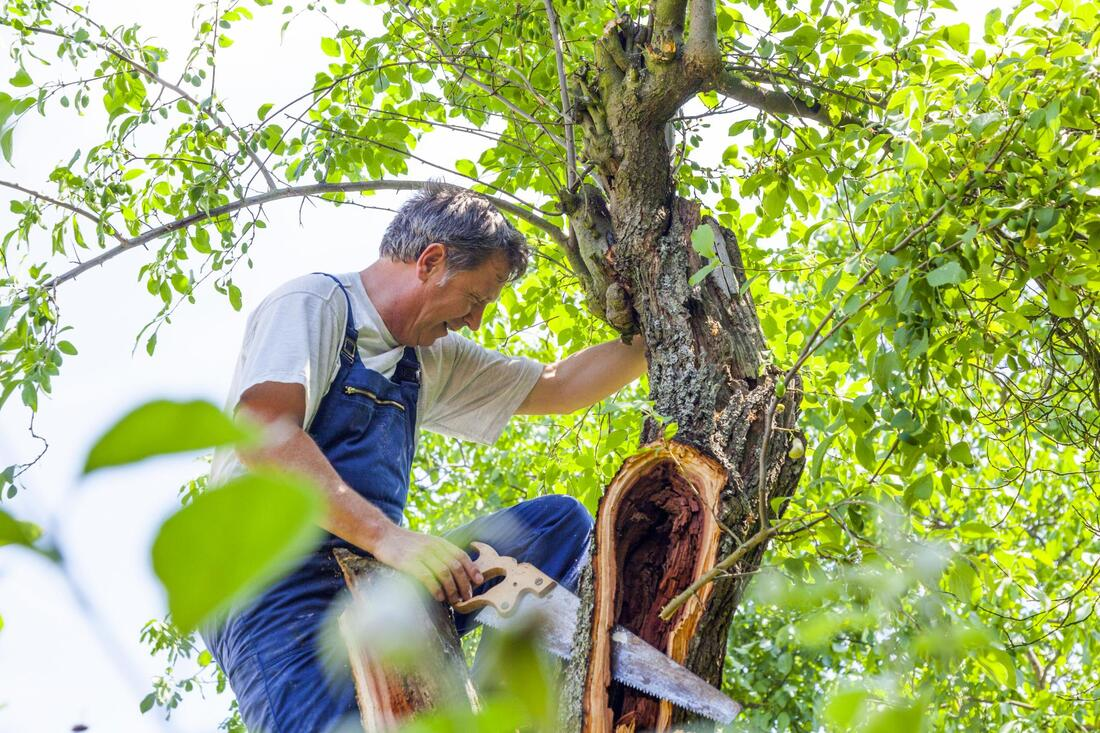 tree-services-bay-area-tree-removal-2_orig